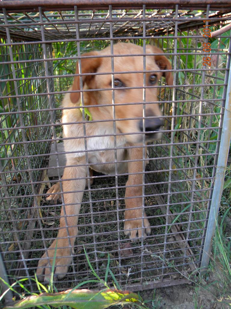 110715 Prise de chien  (3)
