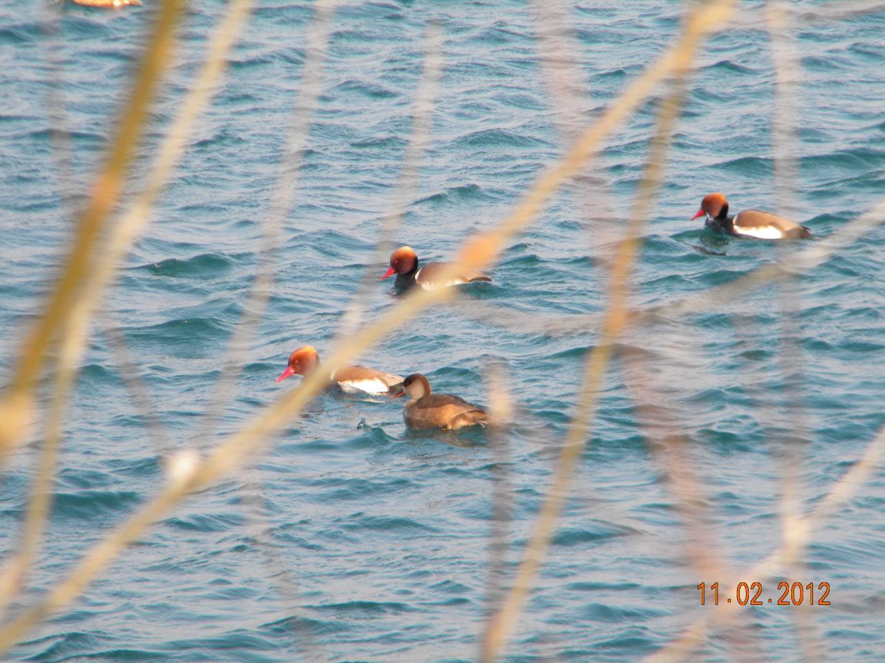 120115 Janv 2012 Nettes Rousses sur Le Pibolo (19)